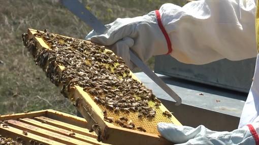 Coldiretti Asti, un corso per diventare apicoltore