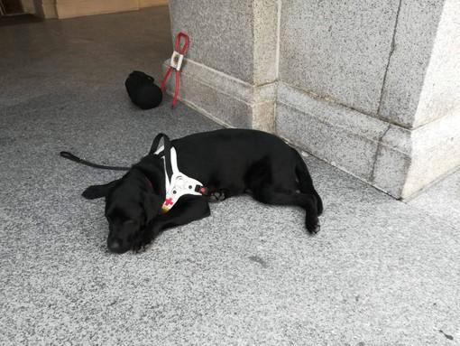 Il sindaco di Serralunga di Crea scrive alla non vedente a cui è stato proibito di entrare in chiesa con il suo cane guida