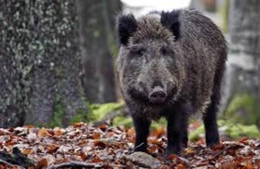 Arriva il saldo dei danni da animali per il sud Astigiano