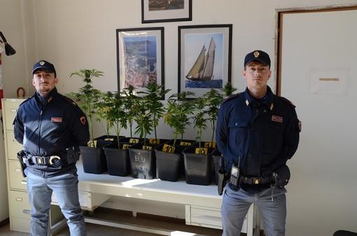Pregiudicato astigiano denunciato per la coltivazione di 16 piantine di marijuana