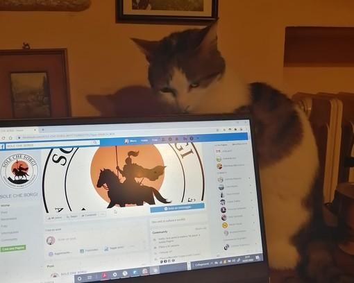 """""""Lo so che ho più follower io in 24 h che voi in un anno. Salutate la gattolista"""" scrivono Malandrone e la gatta Libera nel post che accompagna questa immagine"""