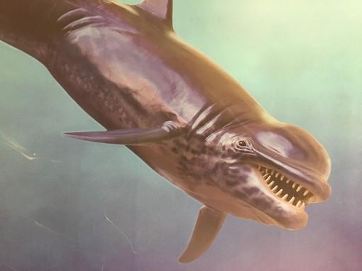 Delfinide
