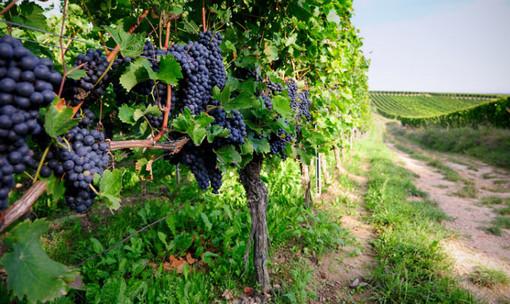 Un bando per promuovere gli investimenti nel mondo del vino