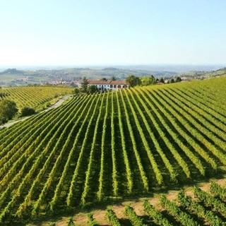 Costigliole d'Asti, tra i comuni più vitati del Piemonte