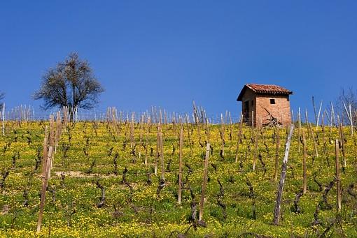 Viviamo in un posto bellissimo: viaggio nel tempo tra le colline Unesco
