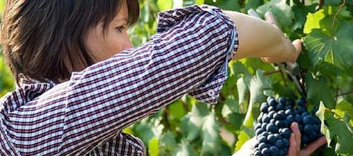 Immagine generica di donna in agricoltura