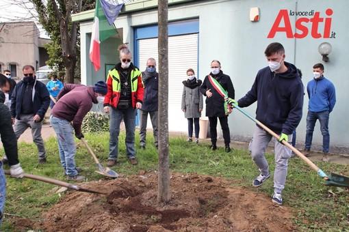 Oggi è la Festa dell'albero, anche nell'Astigiano iniziative e gesti concreti [FOTO]