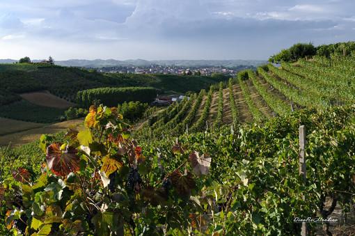 Incentivare turismo ed eccellenze locali con il Distretto del Commercio delle Terre di vini e tartufi