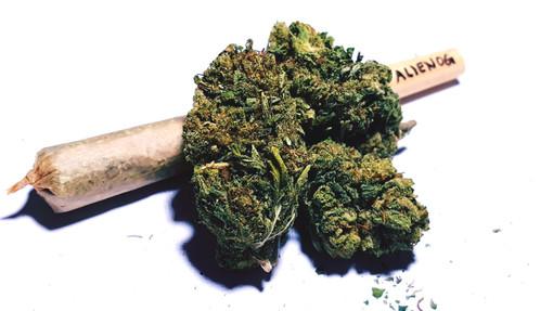 Obbligo di dimora per un 32enne astigiano sorpreso a coltivare marijuana