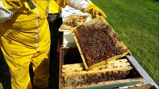 Un apicoltore al lavoro