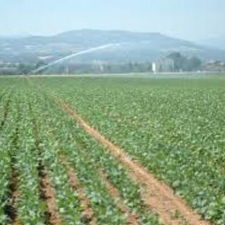 PSR: la Regione Piemonte ha erogato il 95% dei contributi assegnati sulle misure a superficie