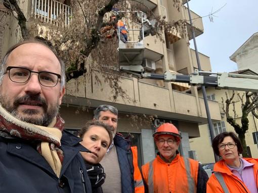 E' iniziata la potatura delle piante lungo corso Torino, l'annuncio (social) del sindaco Rasero