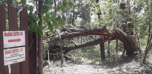 Emergenza maltempo, gravi danni anche al centro di recupero Lipu di Tigliole