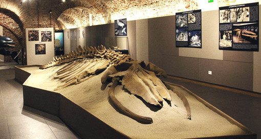 Museo plaeontologico Astigiano