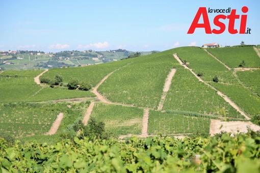 Prossime al via le misure di sostegno alla viticultura piemontese