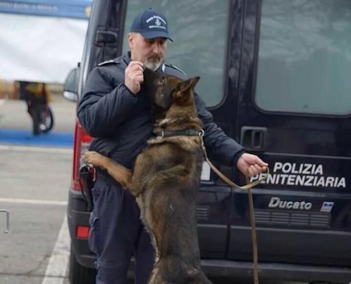 Dai canili al lavoro con la Polizia penitenziaria. Ad Asti la scuola nazionale per cani poliziotto (FOTOGALLERY)