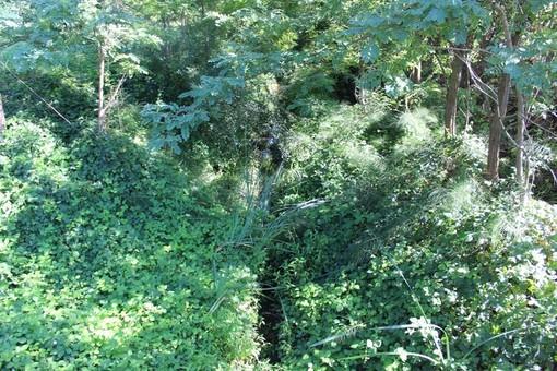 """Angela Motta: """"Il rio Valmanera è una boscaglia. Il Comune cosa fa?"""""""