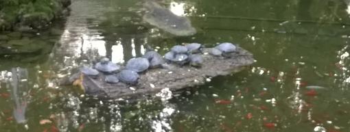 Ad Asti al laghetto dei giardini pubblici si parla di ambiente e animali con l'U.N.A.