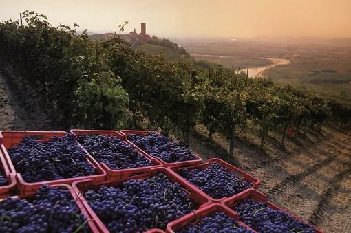 Colline Unesco e ceste d'uva