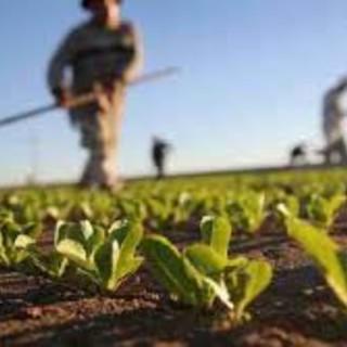 """Covid-19, Coldiretti presenta il """"Piano Marshall"""" per l'agricoltura al Governo"""