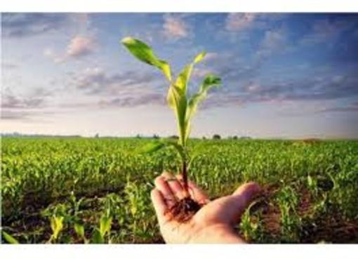 """Asti agricoltura, nuovo governo: """"Nella transizione ecologica l'agricoltura ha un ruolo centrale, al G20 si discuta del legame tra sostenibilità, ambiente e innovazione tecnologica"""""""