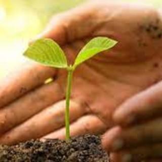 Agricoltura Piemonte, aperti i bandi del Psr su agroambiente e biologico