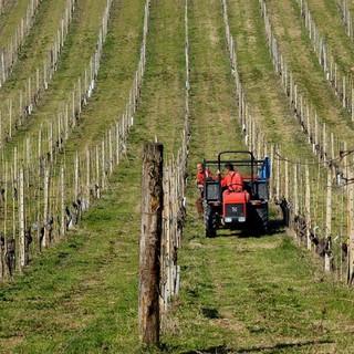 Agricoltura: anche nel 2019 il bilancio delle imprese attive in Piemonte è in rosso