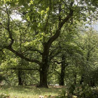 Fase 2: in Piemonte riparte la manutenzione di boschi e foreste