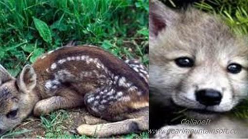 Investiti due cuccioli di animali selvatici sulle strade astigiane. Intervenuti vigili del fuoco e veterinari dell'Asl
