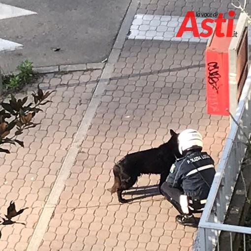 Cane nero in mezzo alla strada in viale Partigiani. Si è smarrito?