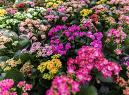 Confagricoltura chiede lo stato di crisi  per il florovivaismo piemontese