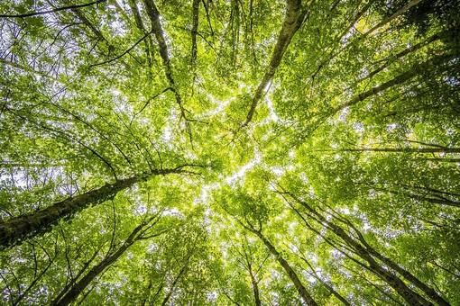Un albero per ogni nuovo nato e un catasto degli alberi: le proposte dei consiglieri di minoranza per una città eco-friendly