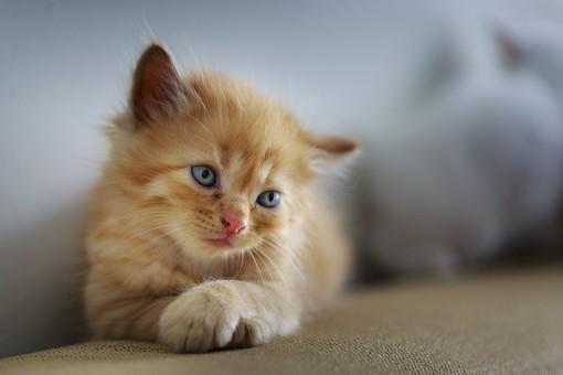 Asti: gattino in un pozzo scoperto di via Torchio, salvato dai Vigili del Fuoco