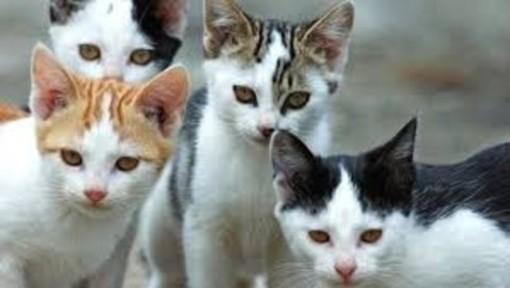 Ad Asti oggi si consegnano alcune cucce alle colonie feline in difficoltà