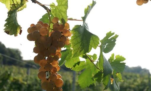 Il Piemonte del vino sbarca alla Milano Wine Week