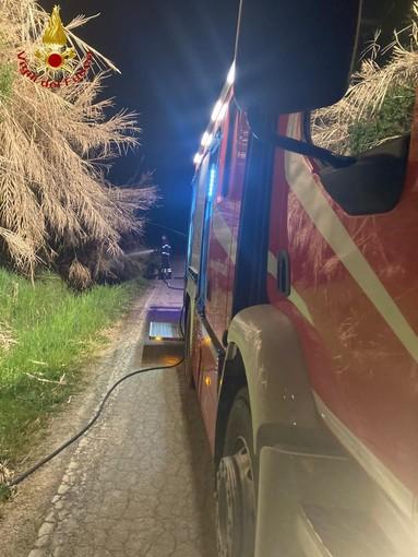 Incendio in un canneto ad Antignano