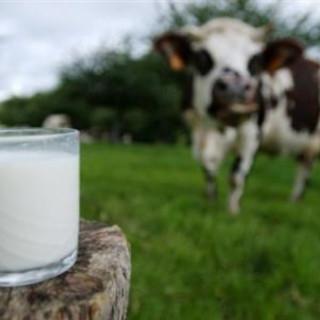 Convocato il tavolo del latte Piemonte, dall'assessore all'Agricoltura