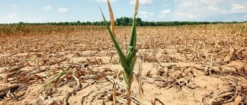 Pericolo siccità nell'Astigiano: si teme per le semine primaverili