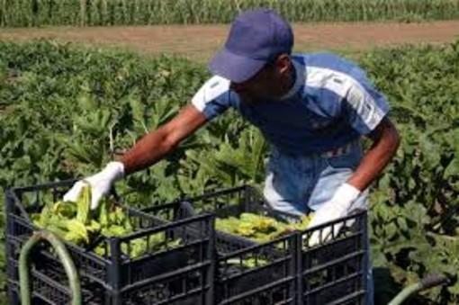 Emergenza Covid e agricoltura: dalla Regione contributi ai comuni per l'affitto di strutture abitative per i lavoratori stagionali
