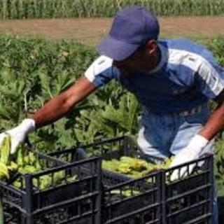 Uno stagionale agricolo