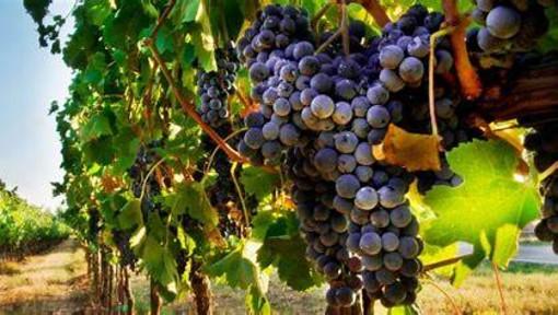 Per l'Anno Internazionale della Frutta e della Verdura, a Canelli un convegno sull'uva