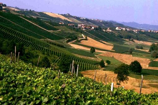 Moscato d'Asti, Barbera d'Asti e Brachetto d'Acqui sono in difficoltà. Ricagno (pres. Consorzio Brachetto): abbiamo chiesto lo stato di crisi alla Regione