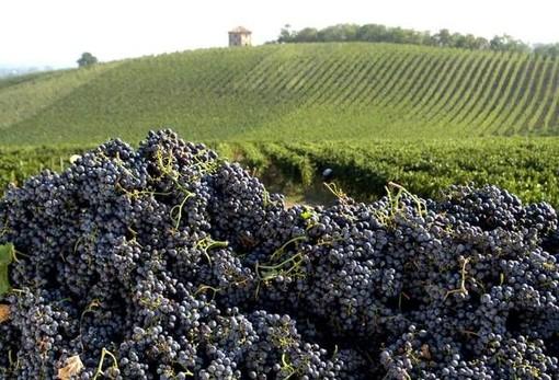 """Vino, la soddisfazione di Coldiretti Piemonte: """"Aumenta l'export ed è boom per l'enoturismo"""""""