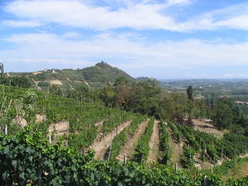 Resa vendemmiale 2020 per Asti Spumante e Moscato d'Asti Docg: 90 quintali per ettaro con 10 quintali/ettaro di riserva